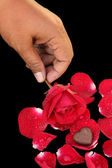 Chocolate heart and red rose — Fotografia Stock