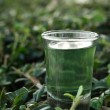 Stock Photo: Wheat grass juice