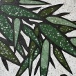 Bamboo painting — Stock Photo
