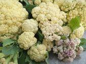 Cauliflower in vegetable garden — 图库照片