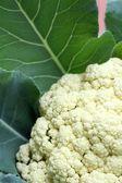 Close-up of cauliflower — Stock Photo