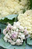 Close-up of cauliflower — Photo