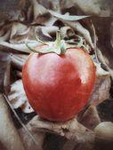 新鮮なトマト — ストック写真