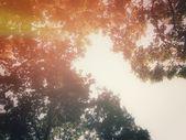 árbol de primavera — Foto de Stock