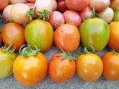 Fresh tomatoes — Stockfoto