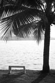 Bench chair and coconut tree — Stock Photo