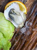 Close up of fresh oysters — Stock Photo