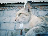Cat looking. — Foto de Stock