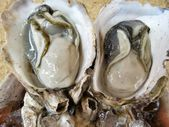 Fresh raw oysters  — Stock Photo