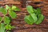 Pepper mint leaves — Stock Photo