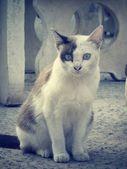 Cat looking. — Stock Photo