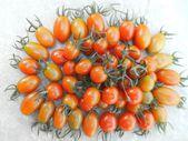свежие помидоры — Стоковое фото