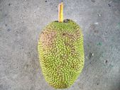 Jack fruit — Stockfoto