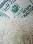 Rice grain and dollar — Stock Photo