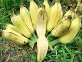 Ripe banana — Stock Photo