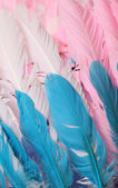ostrich feathers  — Stock Photo