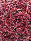Dried chili — Stock Photo