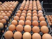 茶色の卵 — ストック写真