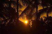 Sunset at coconut tree — Stock Photo