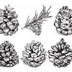 Set of christmas hand drawn pine cones — Stock Vector #34387481