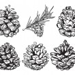 Set of christmas hand drawn pine cones — Stock Vector #34387481