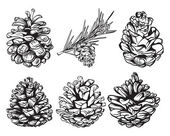Set of christmas hand drawn pine cones — Stock Vector