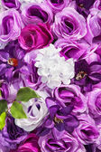 Purple roses — Stock Photo