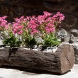Wooden planter - Foto Stock