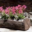 Wooden planter - Stock Photo