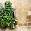Flowery window — Stockfoto