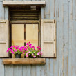 Window with flower pot — Stock Photo #12632289