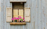 Window with flower pot — Stock Photo