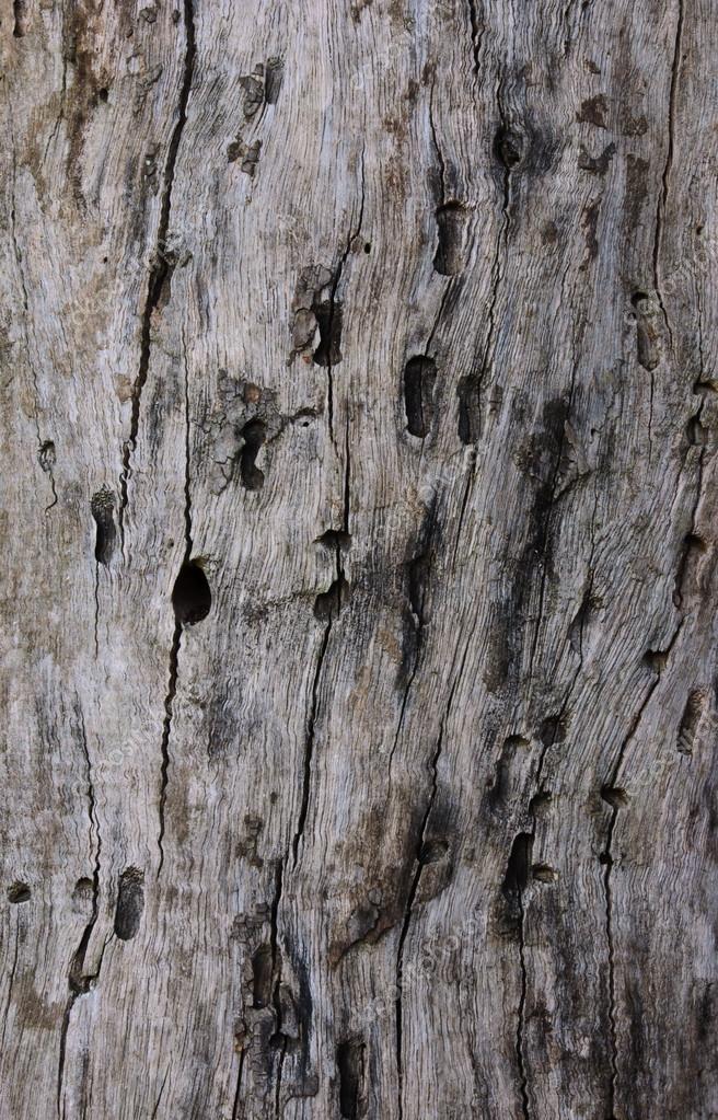 树树皮纹理