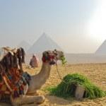 Great Pyramid of Giza, Egypt — Stock Photo