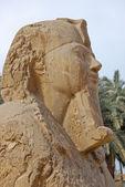 Posąg sfinksa alabastru — Zdjęcie stockowe