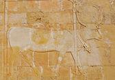 Relieve del dios egipcio hathor — Foto de Stock