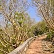Foto Stock: Walkway to top hill