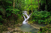 Tropical rainforest waterfall — Stock Photo