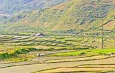 Paisagem das culturas de arroz — Foto Stock