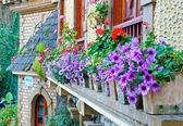 Decorate flowers outside windows — Foto de Stock