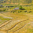 图库照片: Traditional hill tribe rice crops