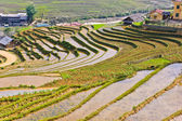 Sapa rice terraced fields, Vietnam — Foto de Stock