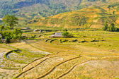 Traditional hill tribe rice crops — Stock Photo