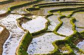 水稻梯田,越南 — 图库照片