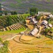 Rice terraced fields in Ta Van village — Stock Photo #13664434