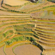 Stock Photo: Rice terraced fields in Sapa, Vietnam