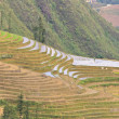Sloping paddy fields in Sapa, Vietnam — Stock Photo