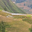 Stock Photo: Sloping paddy fields in Sapa, Vietnam
