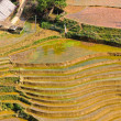 Rice terraced fields in Sapa, Vietnam — Stock Photo #13784810
