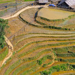 Rice terraced fields in Sapa, Vietnam — Stock Photo